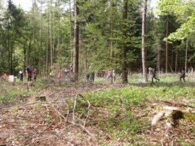 Gemeinsames Engagement für den Wald der Zukunft