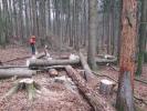 Holzernte