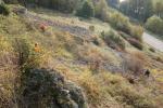 Landschaftspflege 12 Apostel
